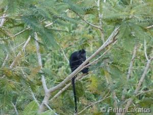 Ein Affe direkt vor der Haustür