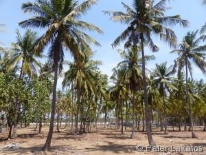 Ging es durch den angelegten Palmenwald