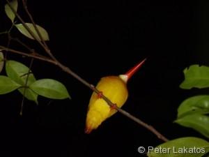 Anfangs dachte ich, eine Zitrone hängt am Baum