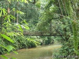 Bambusbrücke in Padawan