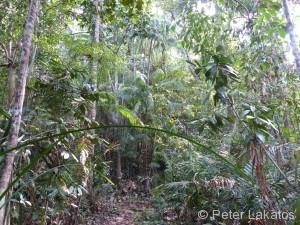 Es ging mitten durch den Dschungel