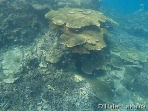 Korallen vor dem Lighthosue