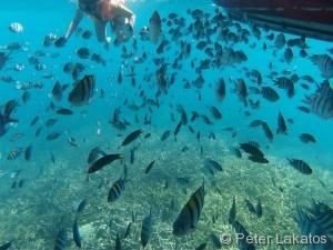 Mehr Fische als Schnorchler