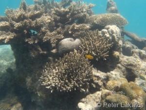 Noch mehr Korallen