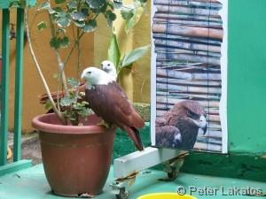 ...und Adler zu sehen