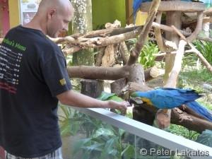 Papageien füttern
