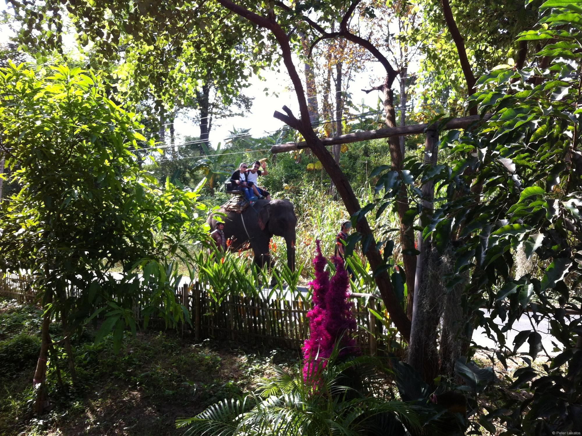 Ein Elefant reitet vorbei