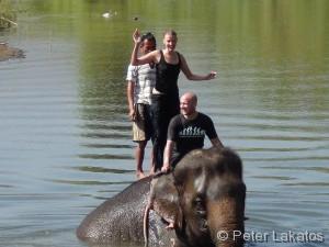 Ich steh auf Elefanten