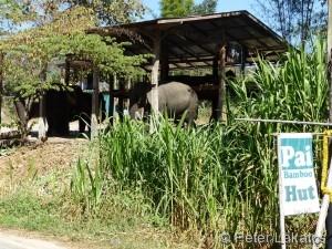 Links eine Elefantenfarm