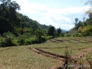 Stopp bei den Reisfeldern