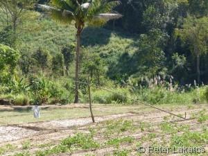 Vogelscheuche in Thailand