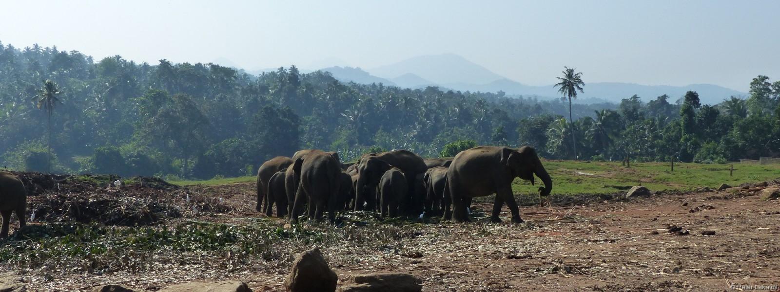 Mit eigenem Fahrer Sri Lanka erkunden – Tag 1