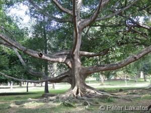 Jahrhunderte alte Bäume