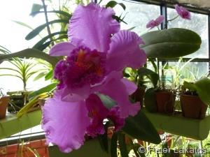 Orchideengarten