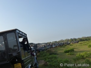 Safari Jeep Auflauf