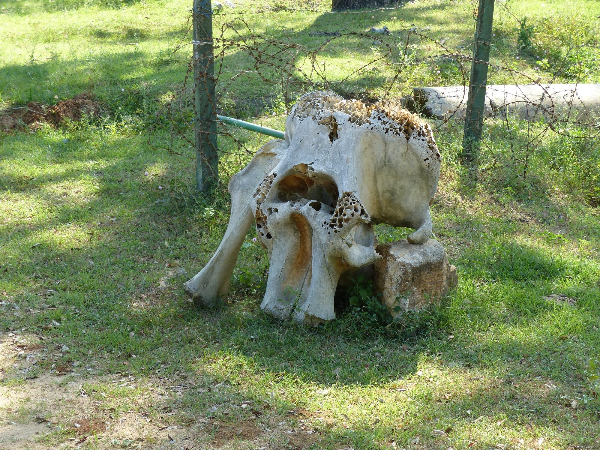 Tierarten ausgerottet