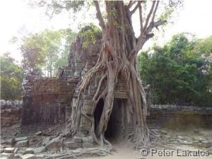 Baum frisst Tempel