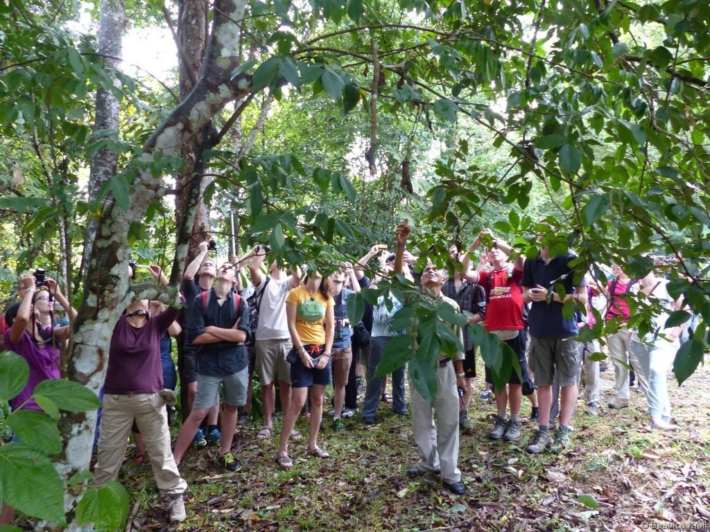 Bei den Wildtierführern im Semengoh Wildlife Center in Malaysia gab es vorab eine Sicherheitseinführung.