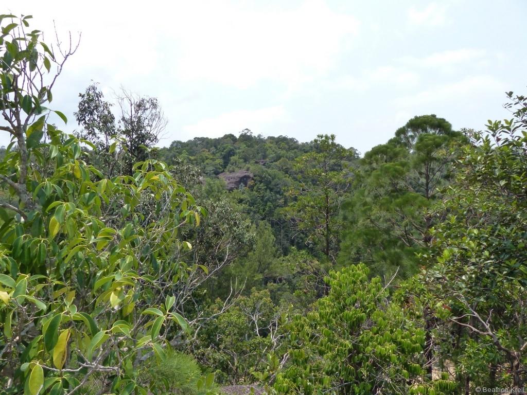 Dschungel soweit das Auge reicht im Bako Nationalpark
