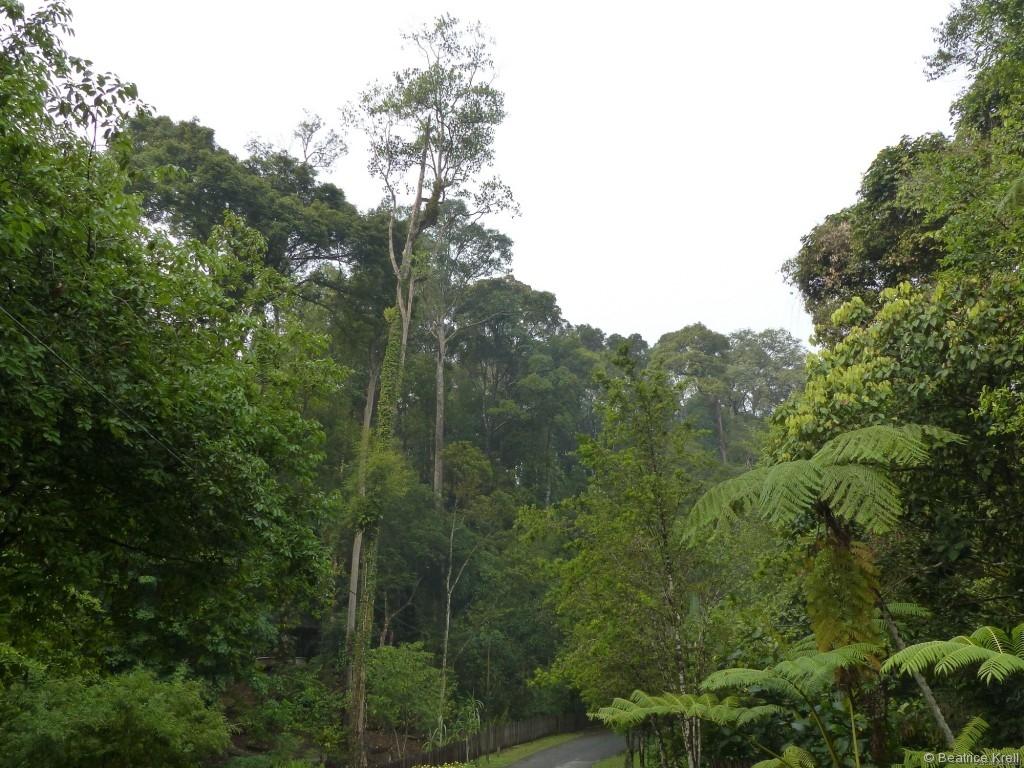 Geschützter Lebensraum für die Orang-Utans