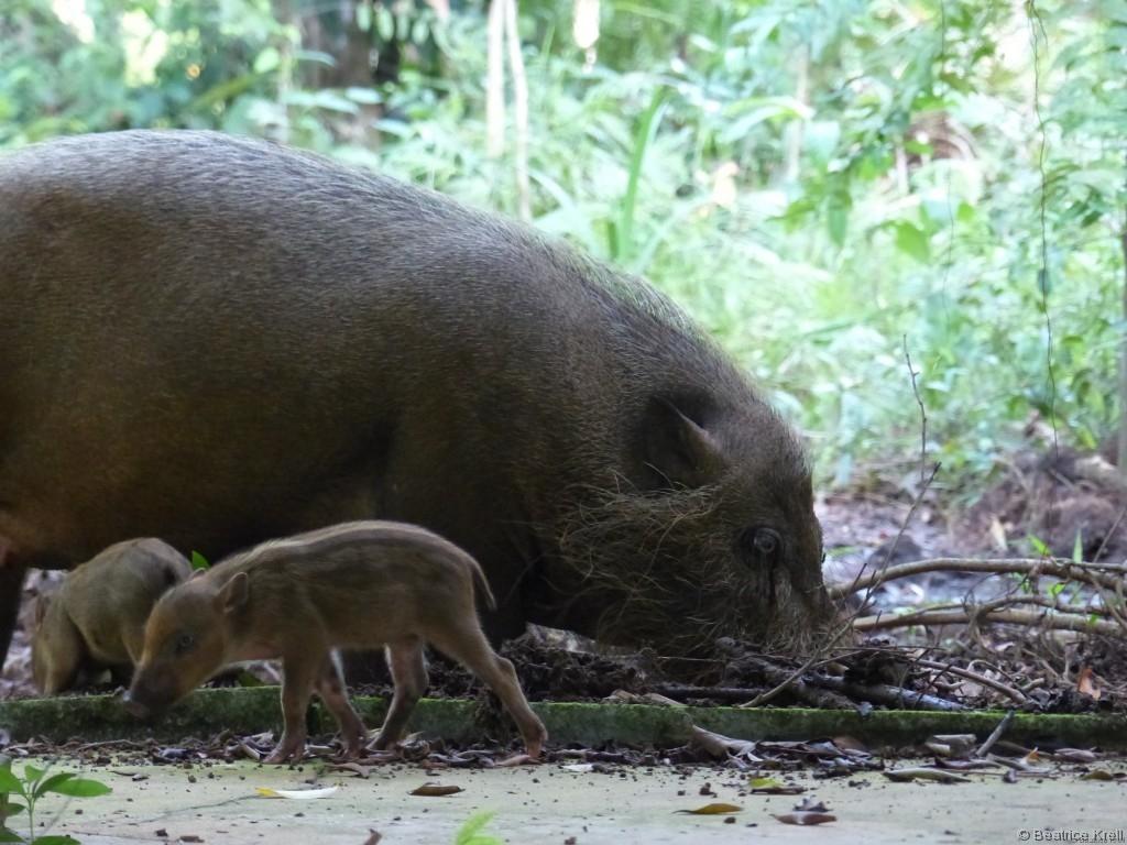"""""""Wild""""schweine gab es auch."""