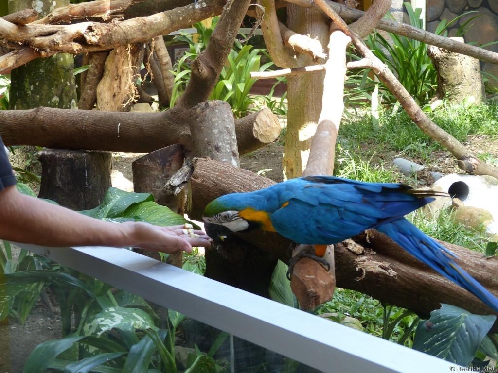 Fütterung eines Papageis im Wildlife Park