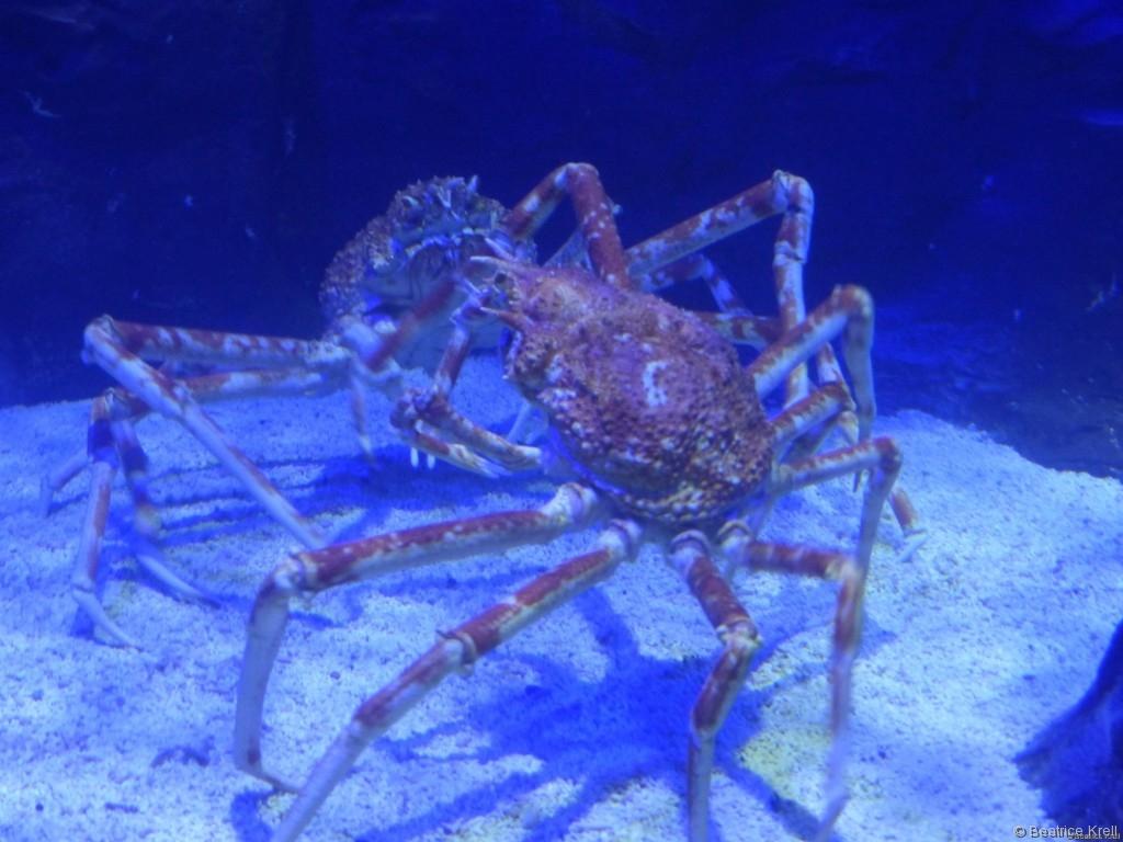 Riesige Krabben in der Underwater World