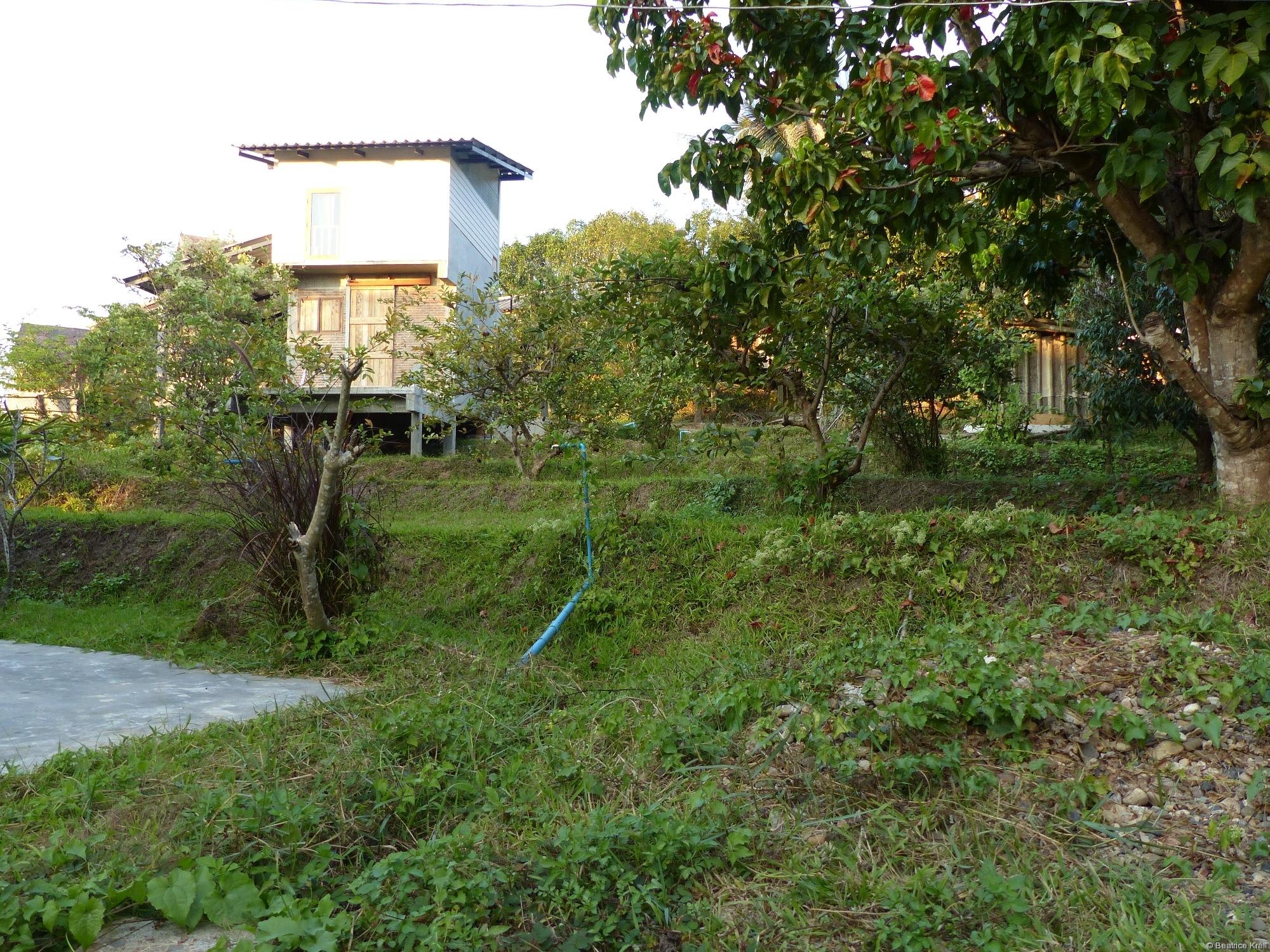 ... liegt auf einer ehemaligen Reisterasse ebenso wie das Häuschen unseres Nachbarn.
