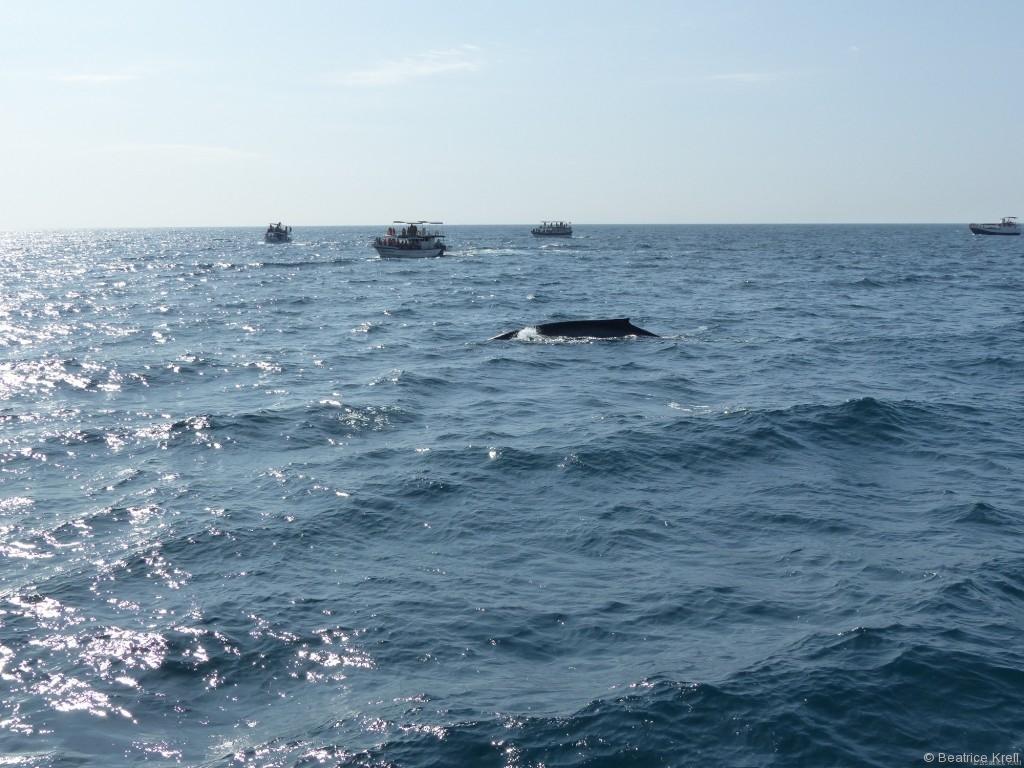 Dann ist auch der erste Wal aufgetaucht.