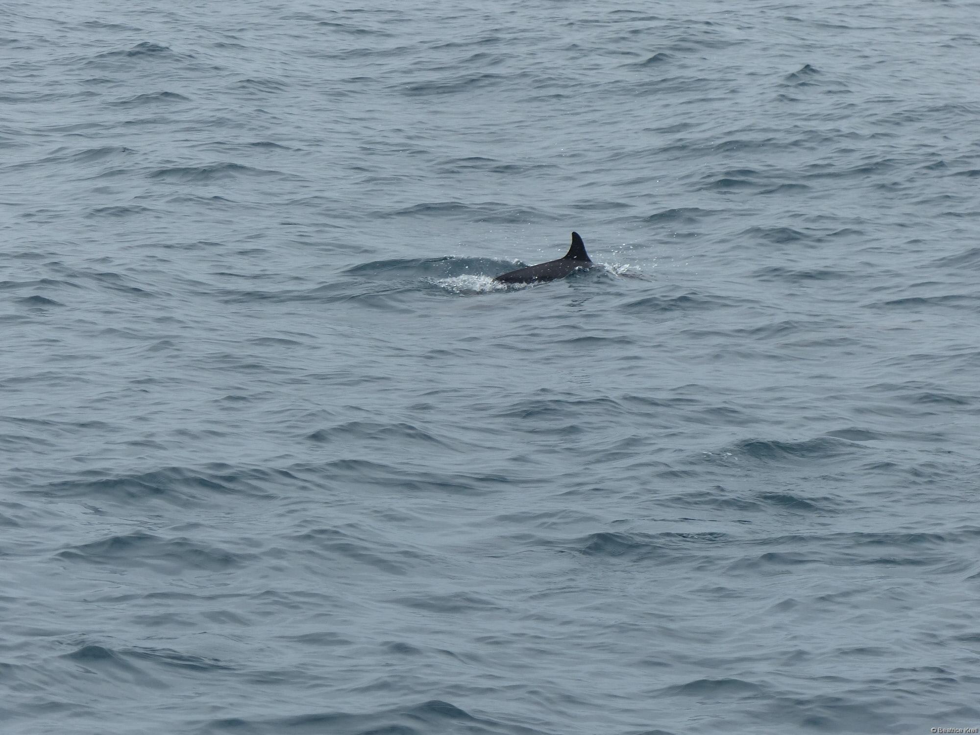 Delfine haben wir auch gesehen.