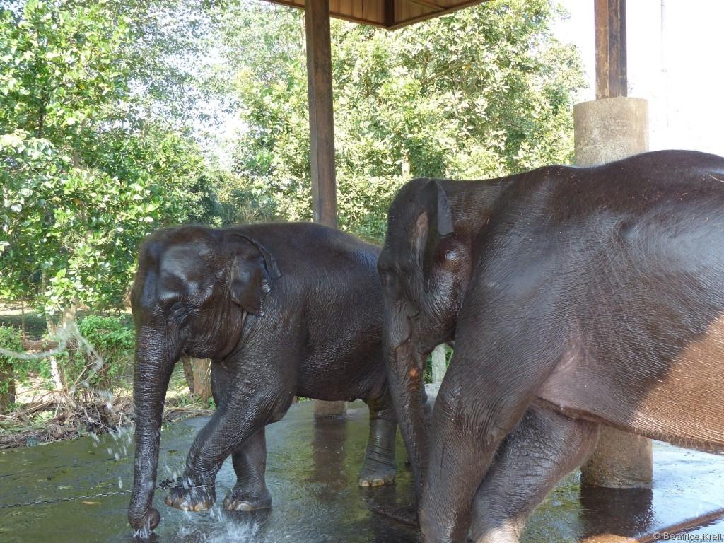 Die Ohren dürften sauber sein, nachdem zahlreiche Touristen diese gewaschen haben.