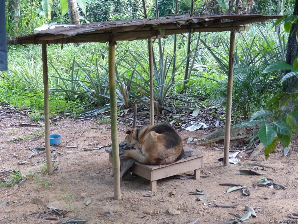 Es gab ebenfalls Hundehütten. Diese sehen in Sri Lanka etwas anders aus als in Deutschland.