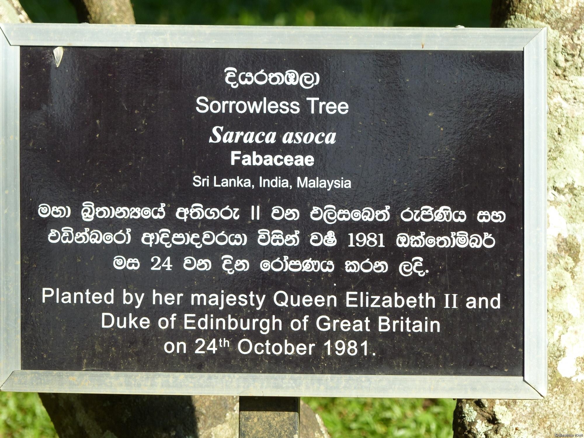 Gedenkbaum gepflanzt von der Königin von England