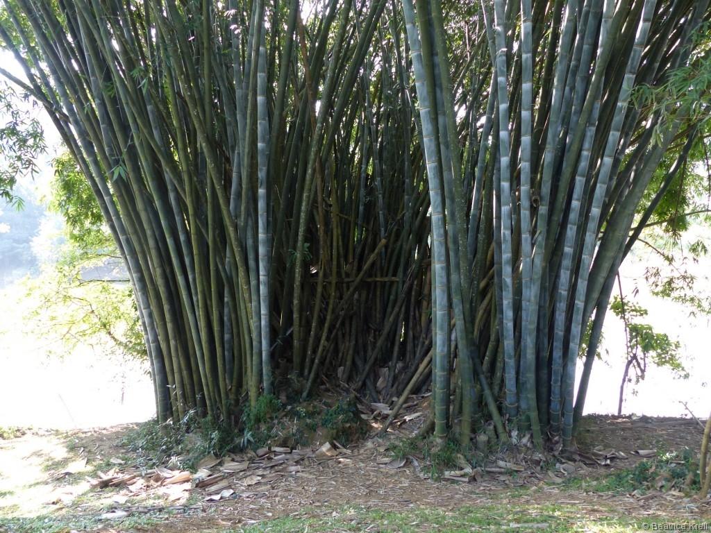 Gigantische Bambusse gaben einem das Gefühl winzig zu sein.