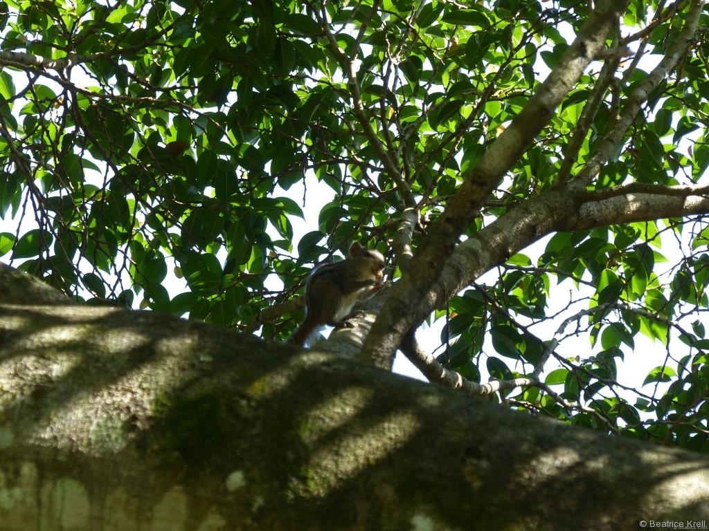 Kleine Streifenhörnchen wuselten auch durch den Botanischen Garten.