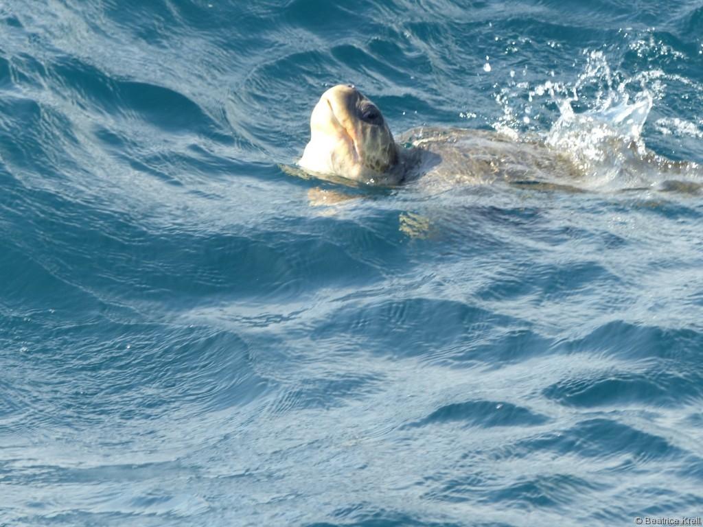 Meeresschildkröten waren auch mit von der Partie.