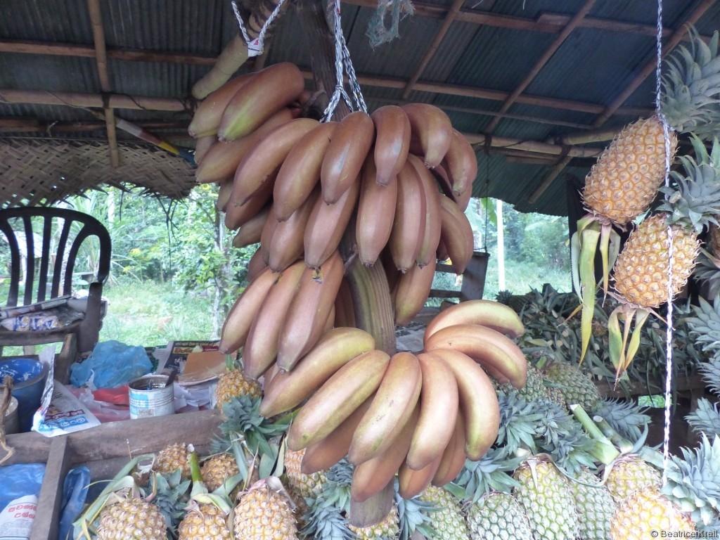 Rote Bananen gab es auch auf der Ananasplantage.