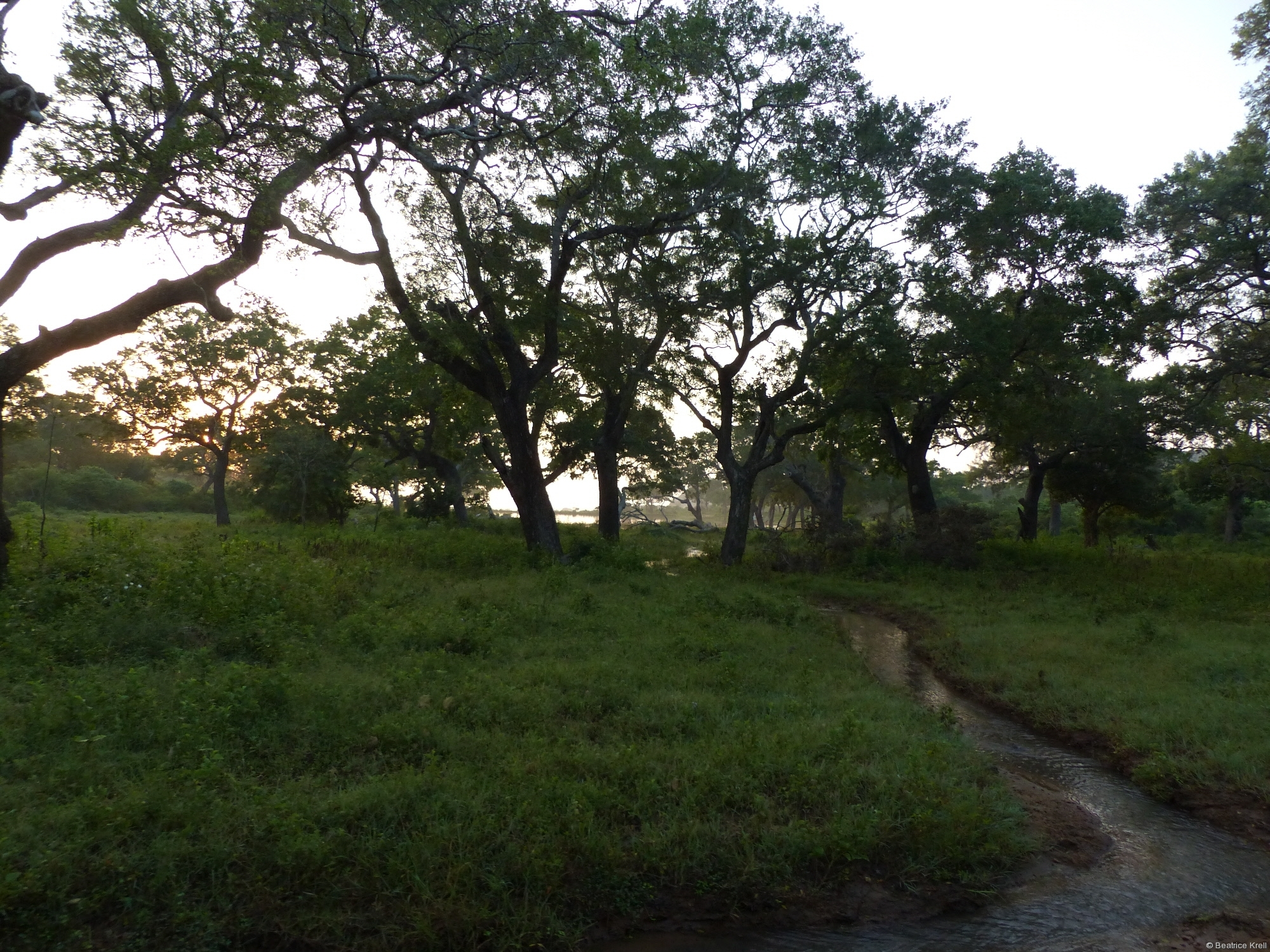 Wunderschöne Vegetation im Yala-Nationalpark