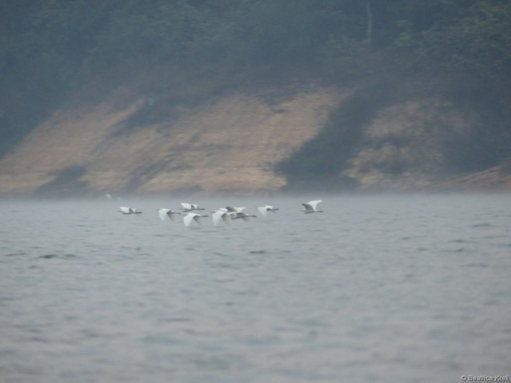 Ein kleiner Vogelschwarm segelt über die Wasseroberfläche.