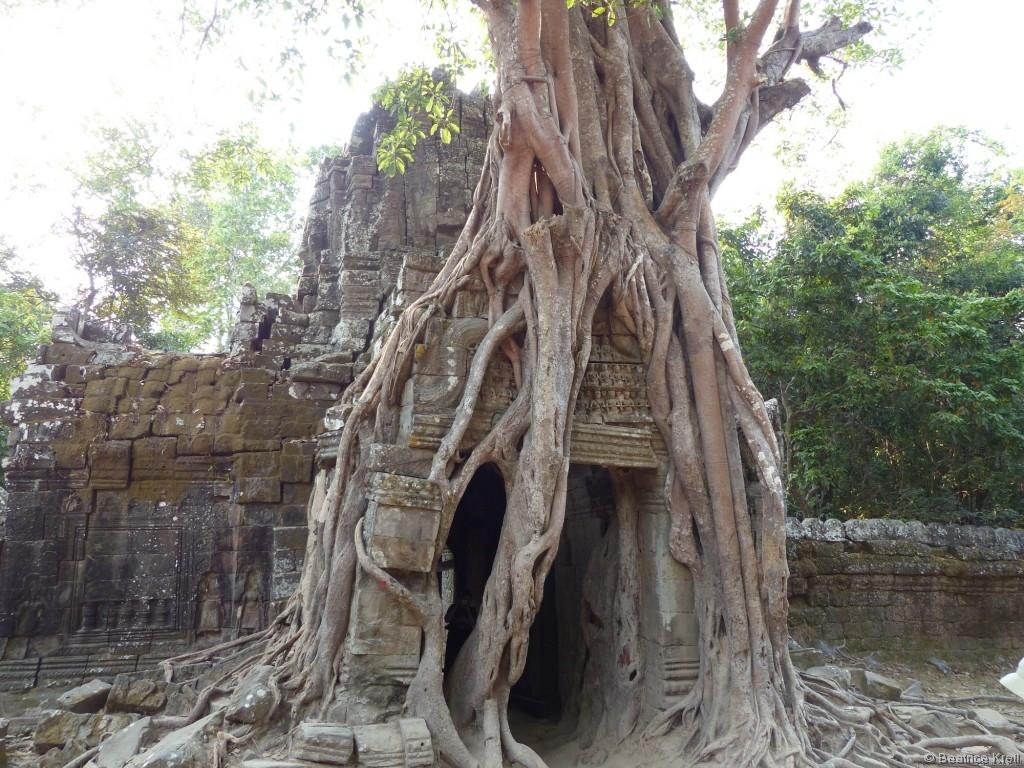 Am Besten haben mir die Tempel gefallen, die sich bereits die Natur zurückerobert hat.