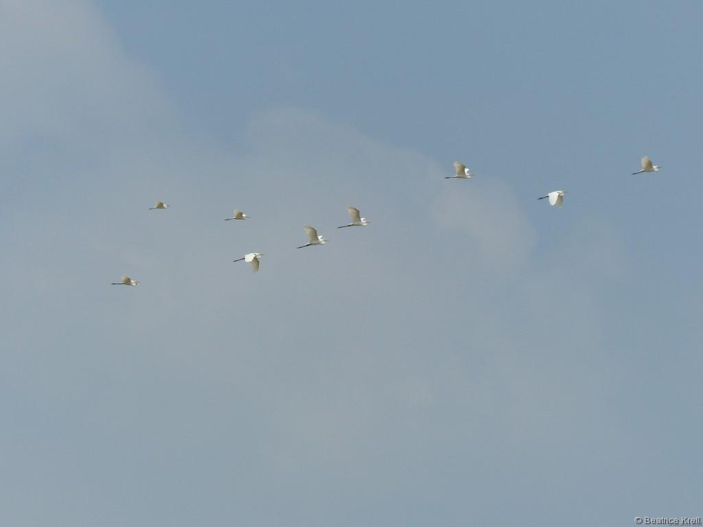 Vögelschwärme begleiteten unsere Fahrt.