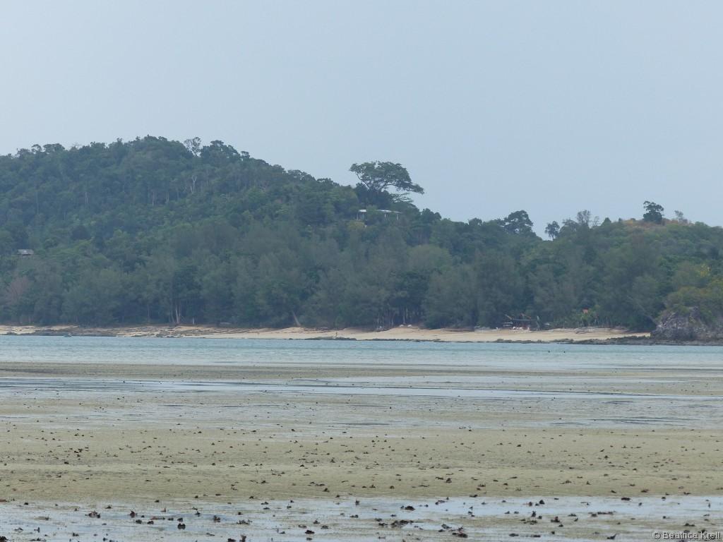 ... der tropischen Vegetation.