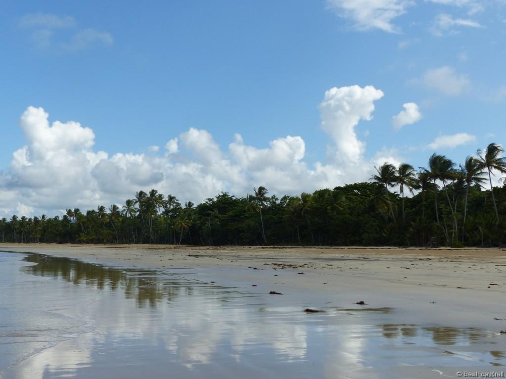 Der von Palmen gesäumte Strand sieht aus wie aus dem Reisekatalog.