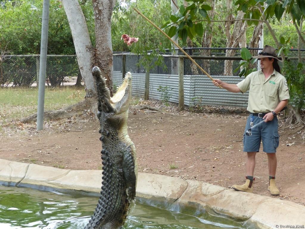 ... natürlich auch zahlreiche Krokodile ...