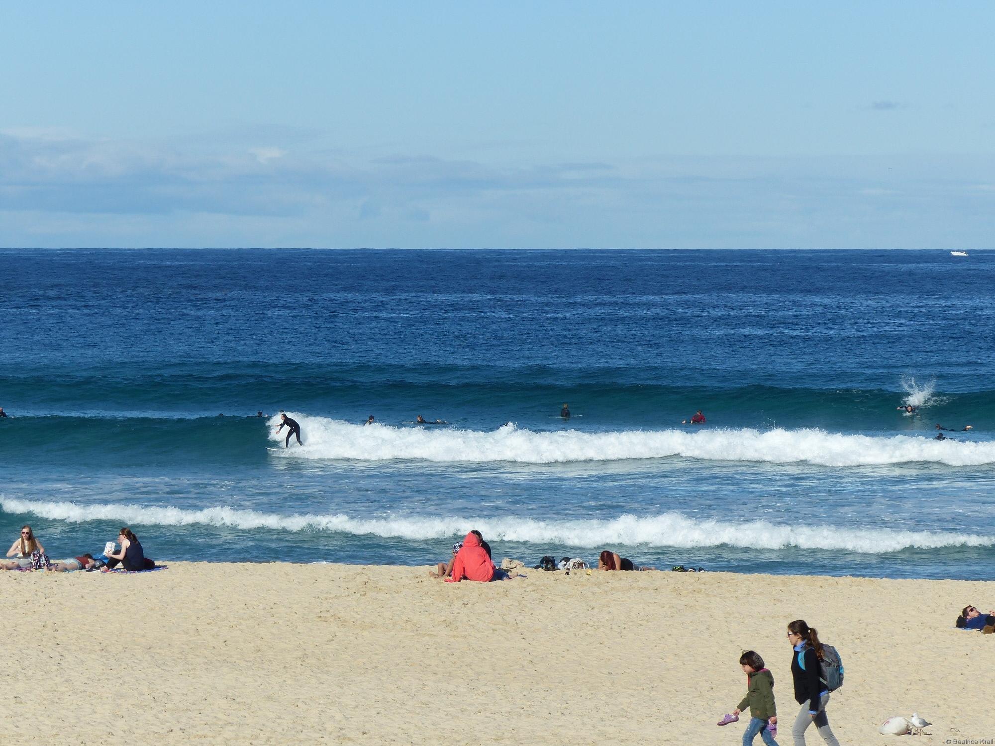 ... ist nicht nur bei Surfern beliebt ...
